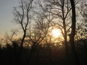 Sunrise behind fragile-looking winter trees